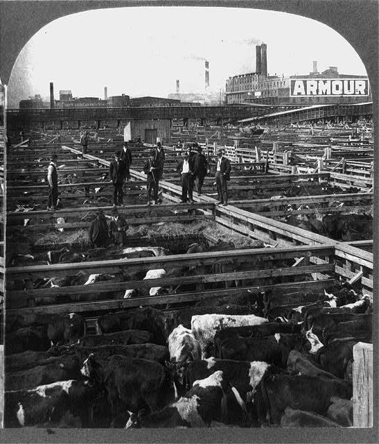 Chicago_stockyards_cattle_pens_men_1909_zps43b8aae3