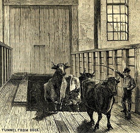 Cow-Tunnel-Engraving-460