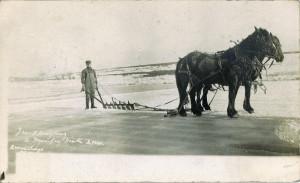 ice trade horses