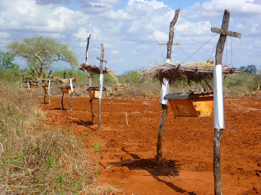 Invisible Fences: Farmers Plant Beehive Guard Posts to Repel