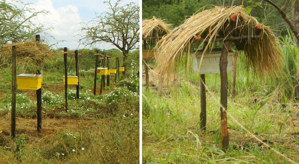 beehive fence setup