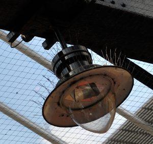 pigeon light