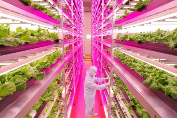 https://99percentinvisible.org/app/uploads/2016/09/vertical-farm-600x400.jpg