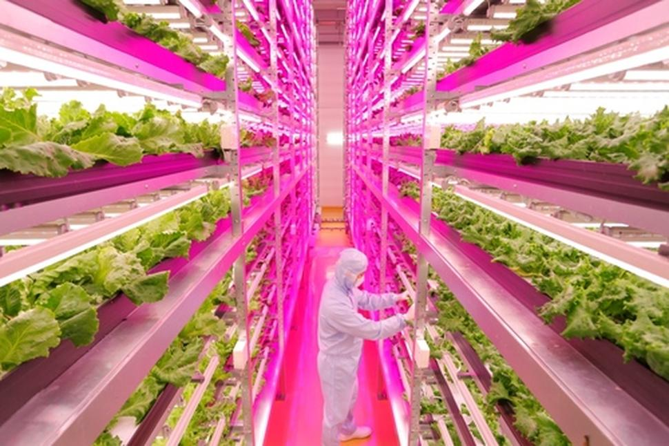 Agricultural futures from home aeroponic gardens to vertical urban ten projects featured here is an effort to rethink the way we produce food now and will in the future existing paradigms of small personal gardens and workwithnaturefo